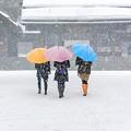 写真: Companion in winter