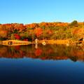 Photos: こい池