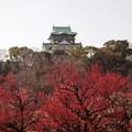 Photos: 大阪城‥燃ゆる