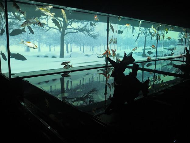 Photos: アートアクアリウム展 2014 大阪