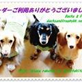 Photos: プチちゃん&大地くん&メレちゃんのカード