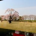 Photos: 枝垂れ桜 IMG_5529