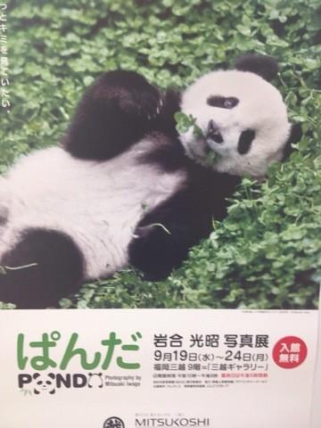 岩合光昭写真展  パンダ
