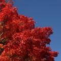 写真: 目の覚めるような赤色