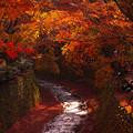写真: 天神さんの秋