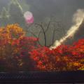 Photos: 朝燃ゆる