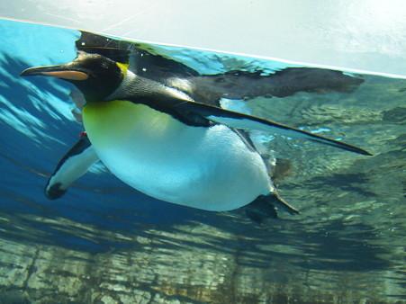 ペンギンも空を飛ぶ