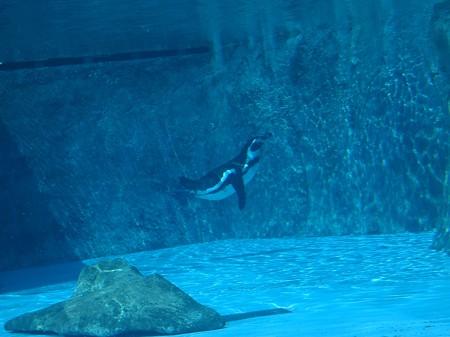 ペンギンシンクロ