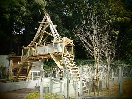 アライグマの立派な2階建てハウス