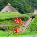 遺跡を背景に咲く曼珠沙華