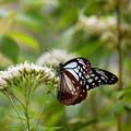 秋の花と蝶