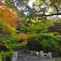 秋の八幡橋