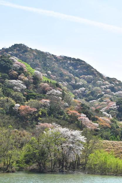 春の里山風景