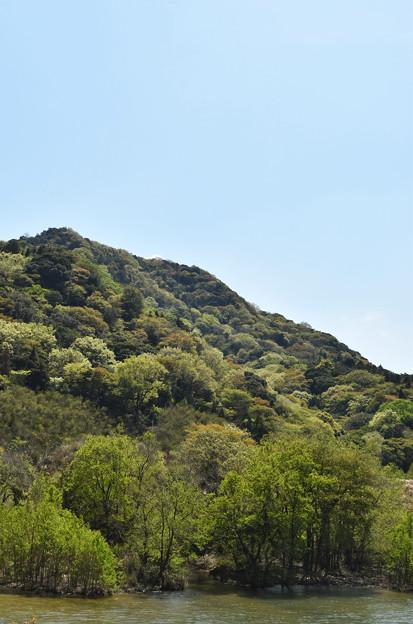 新緑の里山風景