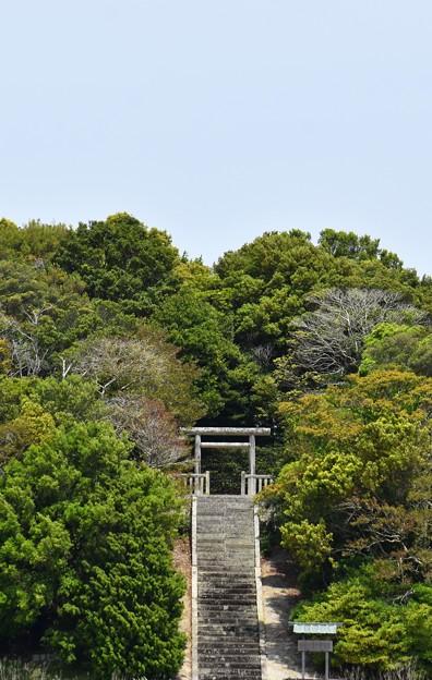 初夏の森 当麻夫人墓