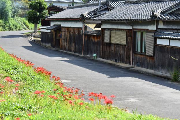 旧家の通りに咲く「彼岸花」