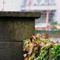 Photos: 横浜 北仲