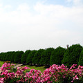 Photos: 港の見える丘公園