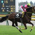 Photos: アイムヒアー 返し馬(13/11/03・ユートピアステークス)