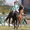 Photos: ファイヤー 返し馬_1(14/02/22・第64回 ダイヤモンドステークス)