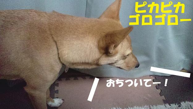 写真: 2012_09_12_01_44_58_b
