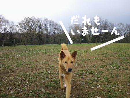 2013_03_31_4