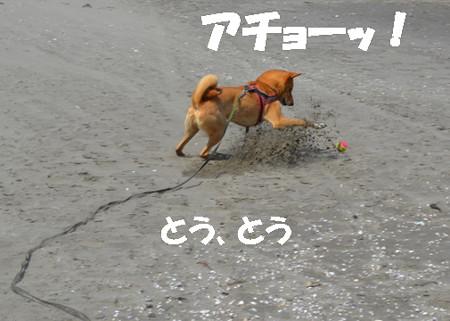 2013_05_06_25