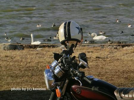2014 白鳥の湖(Лебединое озеро)