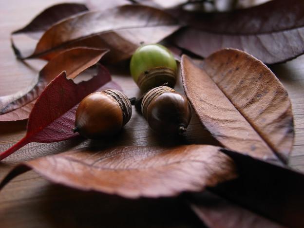 落ち葉と団栗