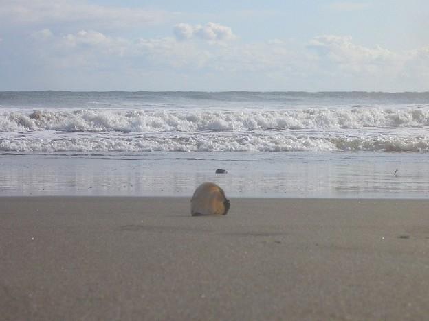大洗サンビーチ 海その238 CIMG4497