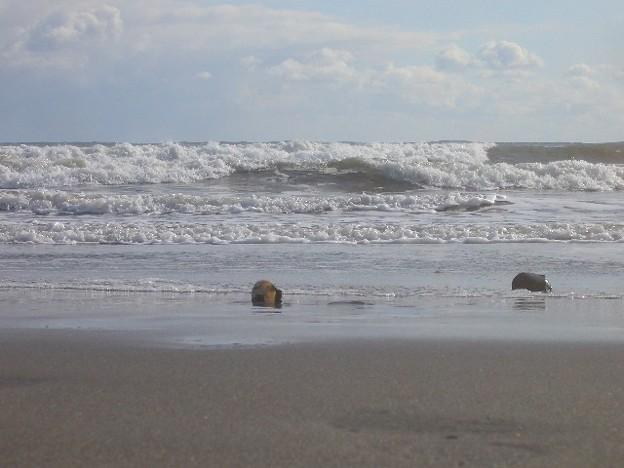 大洗サンビーチ 海その241 CIMG4507