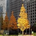 Photos: 黄葉のビル街