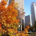 Photos: 紅葉のビル街3