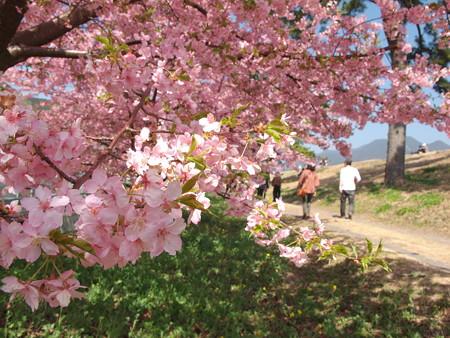 桜と土手沿いの道