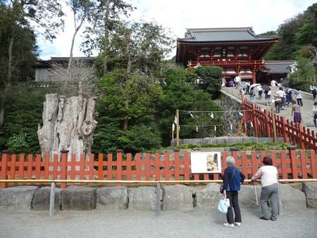 121015-八幡さま (8)