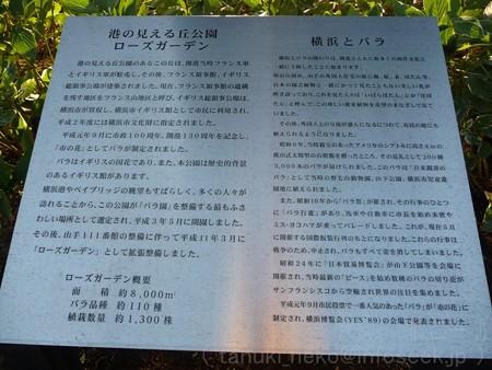121022-港の見える丘公園 バラ園 (3)