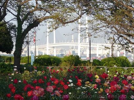 121022-港の見える丘公園 バラ園 (24)