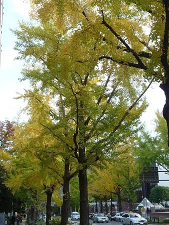 121115-紅葉 山下公園通り (4)