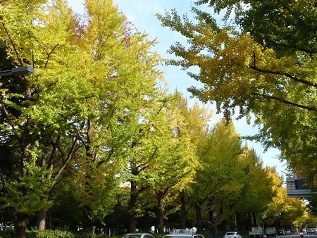 121115-紅葉 山下公園通り (8)