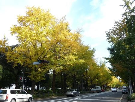 121115-紅葉 山下公園通り (11)