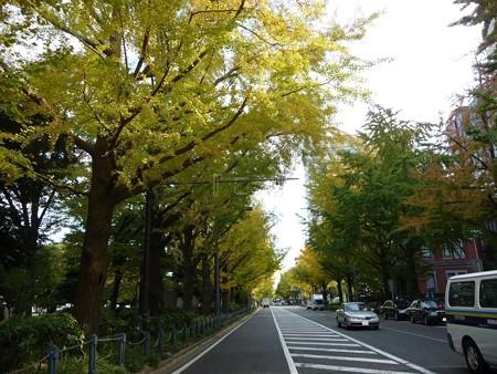 121115-紅葉 山下公園通り (13)