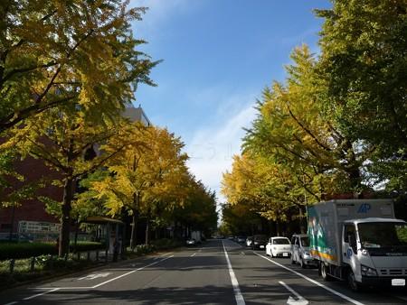 121115-紅葉 山下公園通り (28)