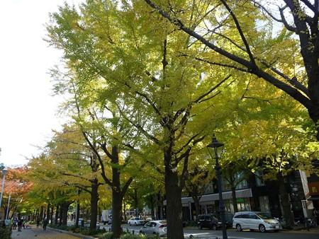 121115-紅葉 山下公園通り (35)