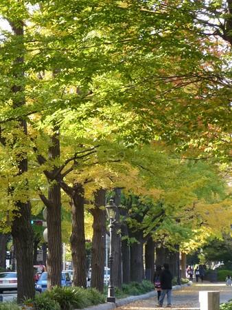 121115-紅葉 山下公園通り (47)