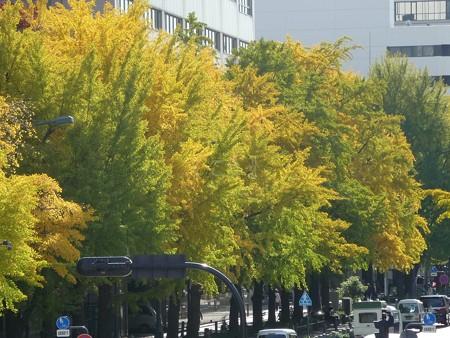 121115-紅葉 日本大通り・県庁 (3)
