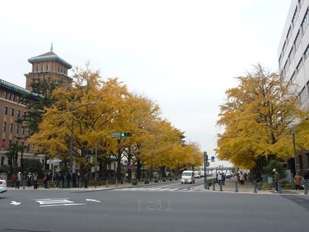 12.11/29 紅葉 日本大通り・県庁 (17)