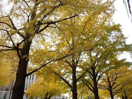 12.11/29 紅葉 日本大通り・県庁 (20)