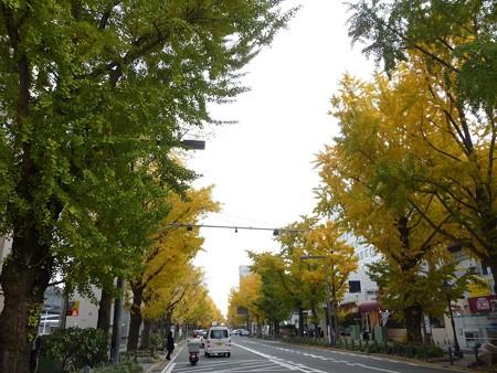 12.11/29 紅葉 山下公園通り (40)