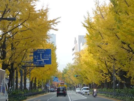 12.11/29 紅葉 山下公園通り (24)