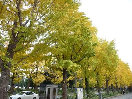 12.11/29 紅葉 山下公園通り (29)